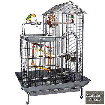 parrot as a pet essay