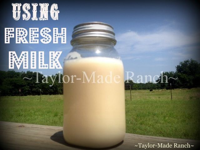 Using FRESH MILK - I'd always wanted to try milking one of our cows to get fresh milk for our family, see what I did with the FRESH MILK! #TaylorMadeHomestead