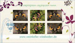 Schau Dir das Produkt Werbebanner 52cmx91cm an, das ich bei Vistaprint erstellt habe! Individuelle Gestaltung Ihrer eigenen Werbebanner 52cmx91cm um http://www.vistaprint.de/custom-banners.aspx. Holen Sie sich individuelle farbige Visitenkarten, Banner, Schecks, Weihnachtskarten, Briefpapier, Adressetiketten...