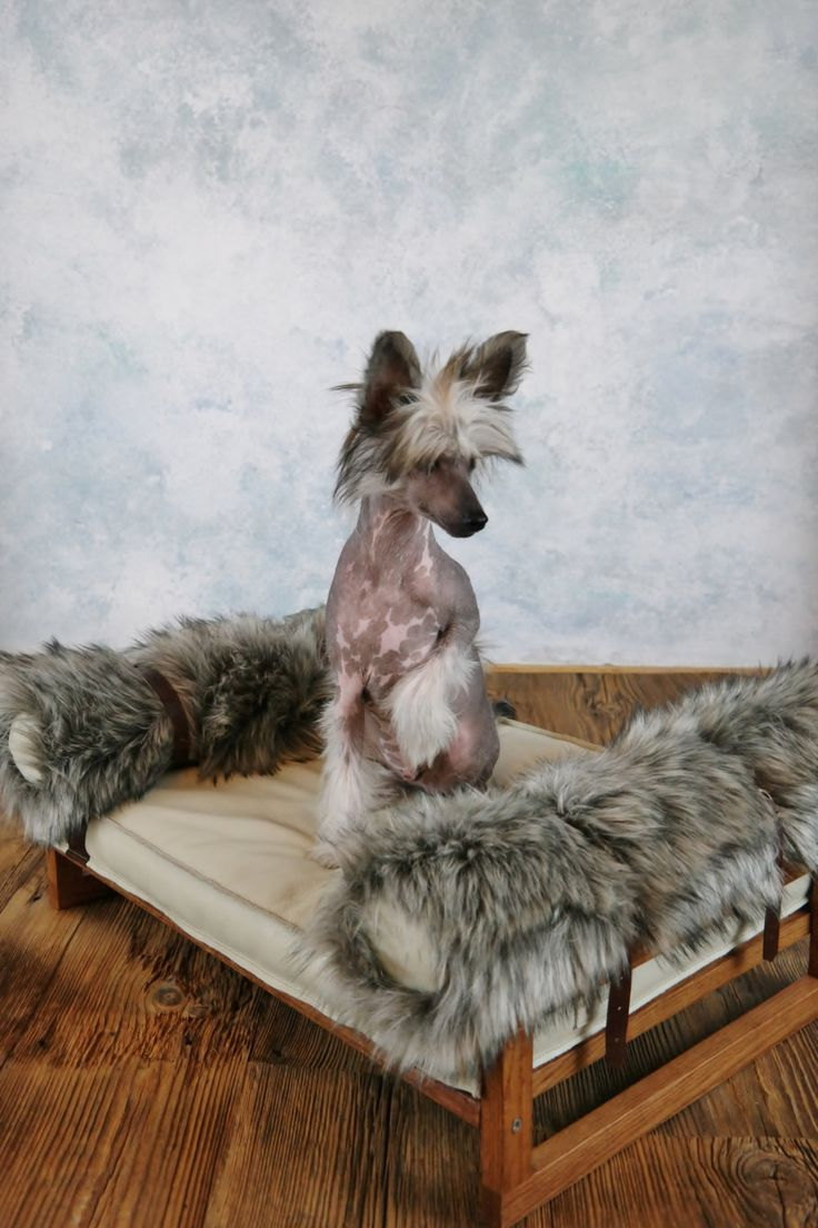 Leather & Fur - dog bed / cat bed by ooMelampus on Etsy