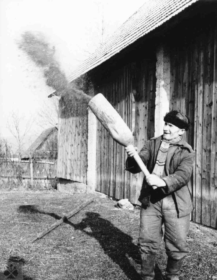 Drifting grain.  Liptovské Sliače, district.  Ruzomberok.  Photo.  ¼.  Ondrejka, 1963. Adapted from Slavkov, P.: World on departure.  The traditional agrarian culture of Slovaks in Central and Southern Europe.  Bratislava 2009, 84th
