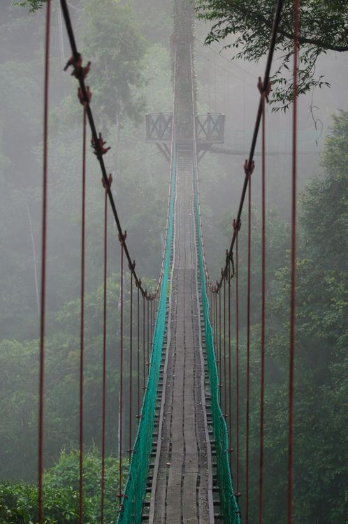 This is truly amazing and scary. Canopy Walk, Danum Valley, Malaysia ~ above the trees and into the sky.