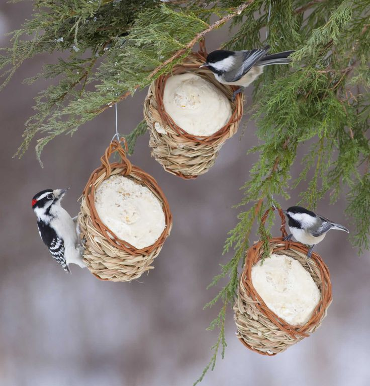 DIY: Fill Dollar store baskets with suet & seed, press firmly. Hang on tree for #winter #bird #feeding