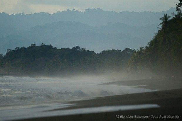 Plage sauvage dans le parc national de Corcovado, Costa Rica