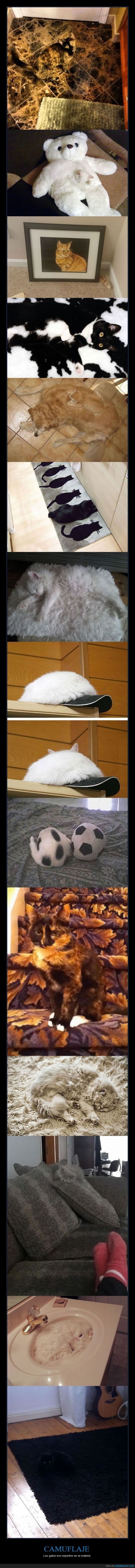 Alucinando con la maestría de los gatos en el camuflaje - Los gatos son expertos…