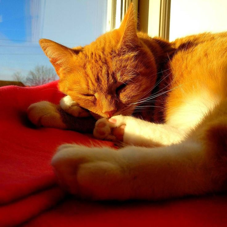 The #cat is enjoying the winter sun