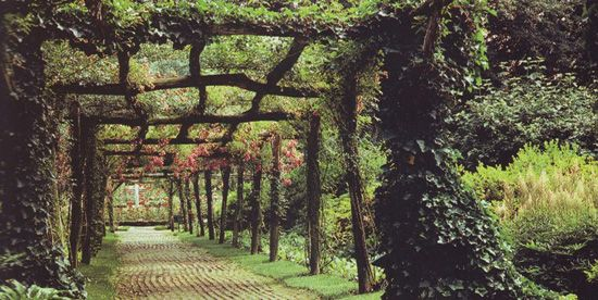 Organic Shade Structure Vine Support Inspiration Only