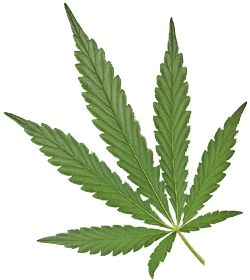 How to Open A Medical Marijuana Dispensary With limited Risk - The Dispensary Experts: How to Open a Dispensary