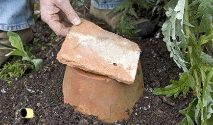 How to make a bumblebee nest - Projects: Wildlife gardening - gardenersworld.com