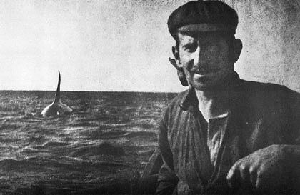 """1908 photo of Old Tom and a Davidson whaler. For over a century, orcas (killer whales) returned to Eden, NSW, Australia, to hunt with the Davidson family. The pod would """"summon"""" the whalers by """"tail-flopping"""" before leading the Davidson whalers to the hunt. When it was over, the orcas were left to claim their """"share"""" and the whalers would later collect the remains. This arrangement was called """"the law of the tongue"""". The orcas also protected the whalers from sharks if they went overboard."""