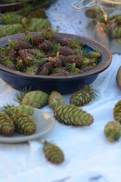 Apetyczna babeczka: Syrop z zielonych szyszek modrzewia