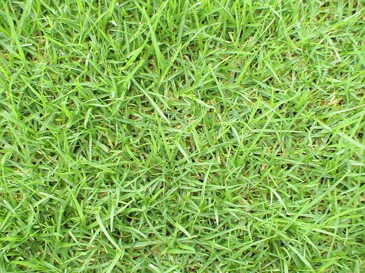 Kikuyu is an ideal lawn if you have high traffic or digging dogs. This lawn repairs itself rather quickly. It is a creeping lawn that is fast growing, which is good for quick repairs but not ideal if you have garden beds as Kikuyu is very aggressive if uncontrolled.   Lilydale Instant Turf   Love your lawn   Great grass   Lily & Dale   Follow us   Garden Tips & Advice   Contact us   Lawn Solutions Australia