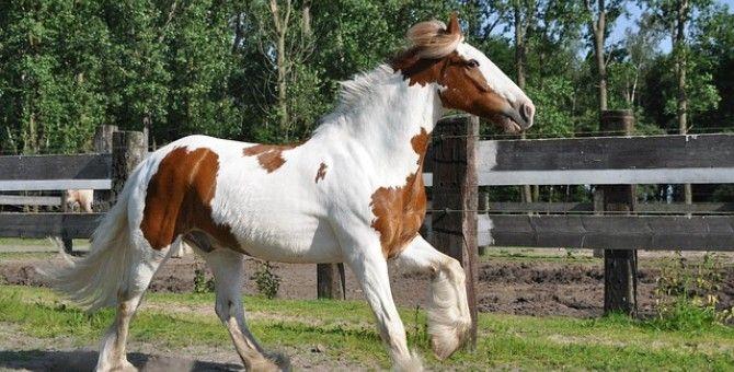 Leg of horse !!!