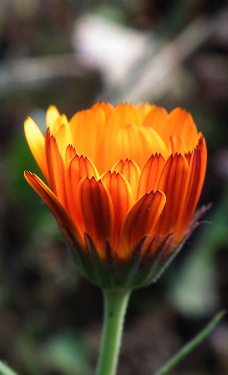Beautiful flower, 35 best flower photos