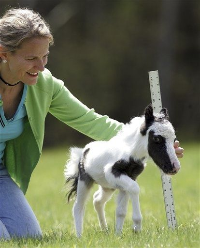 The world's smallest horse name Einstein...... (Click on picture to read more)
