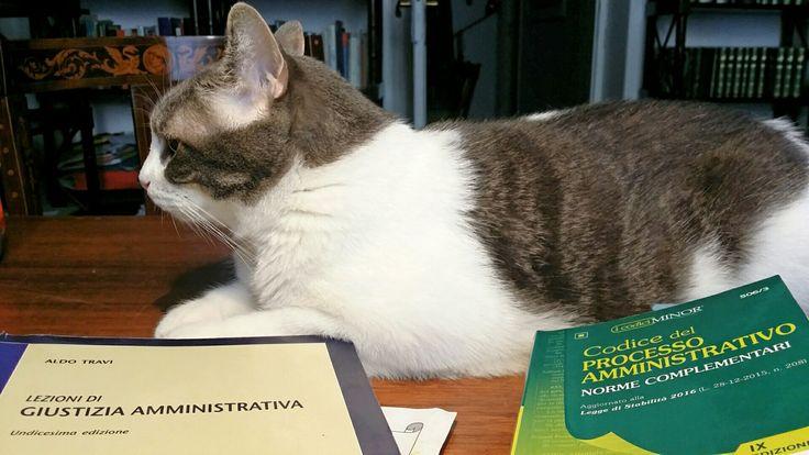 Meditazioni sul processo amministrativo...