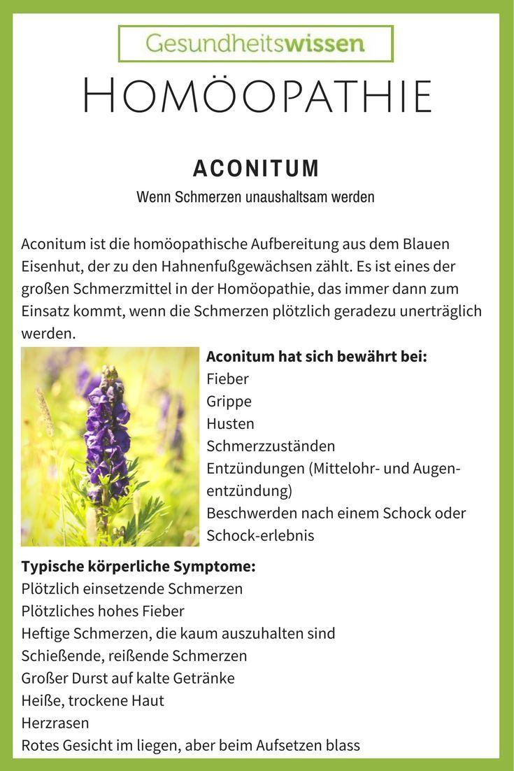 Der blaue Eisenhut ist eine der giftigsten Pflanzen Mitteleuropas und wurde früher als Pfeilgift verwendet. Anfang der Blütezeit wird für das homöopathische Arzneimittel die Wurzel, die Blüten und auch die Blätter verarbeitet. Blauer Eisenhut wird häufig
