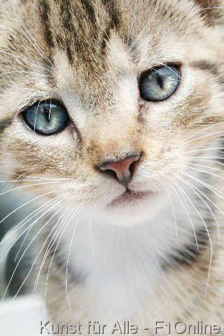 Schnurrhaare+Katzenbaby