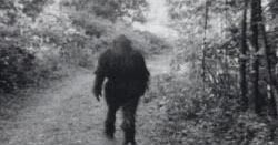 "Pictures of Bigfoot? - Okay, so today I just surfing around the internet ....just looking for something cool I might want to share..and I ran across a set of videos on youtube. These videos are supposedly the ""The clearest images of bigfoot ever"". So, Let have a look"