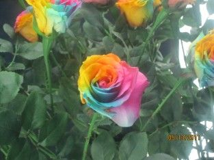 rosas exoticas - Buscar con Google
