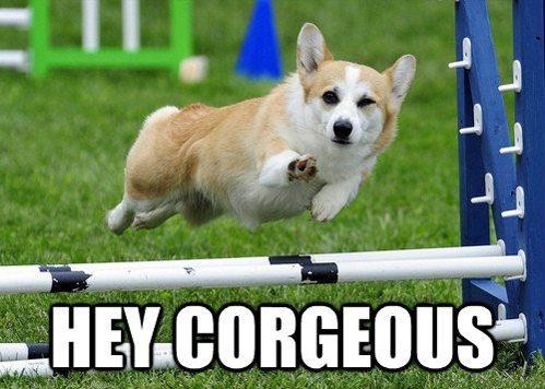 Hey Corgeous...