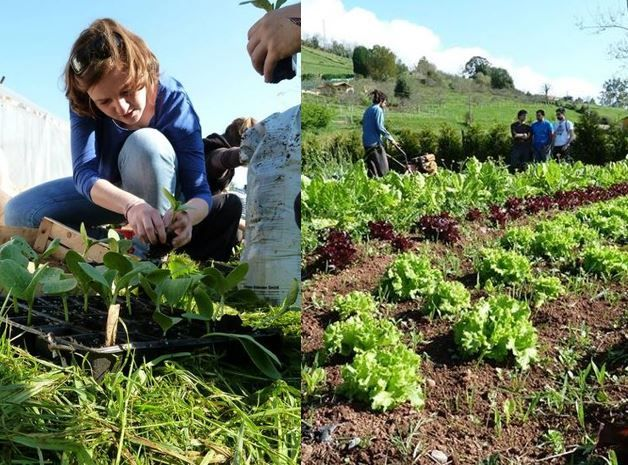 Planting vegetables in Spain! Young people acting for the environment. Green startup Training. (pumpkin sprouts on the left)