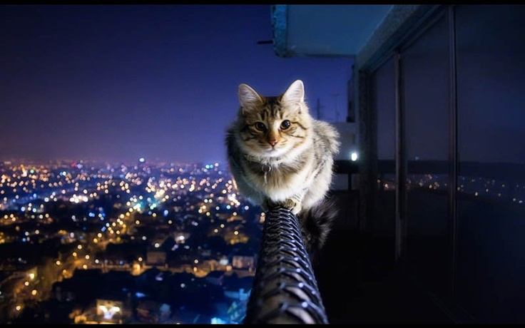 COURAGEOUS KITTY  Photograph by CRAZY IVORY  That is one crazy, supremely-confident cat! Amazing shot by 22-year-old Ivo, based in Berlin, Germany. Shot using a Canon EOS 40D + Canon 18-55mm lens.