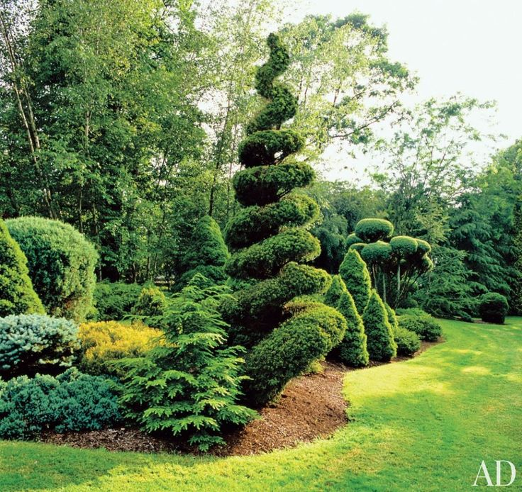 49 best Designs with Trees and Shrubs images on Pinterest