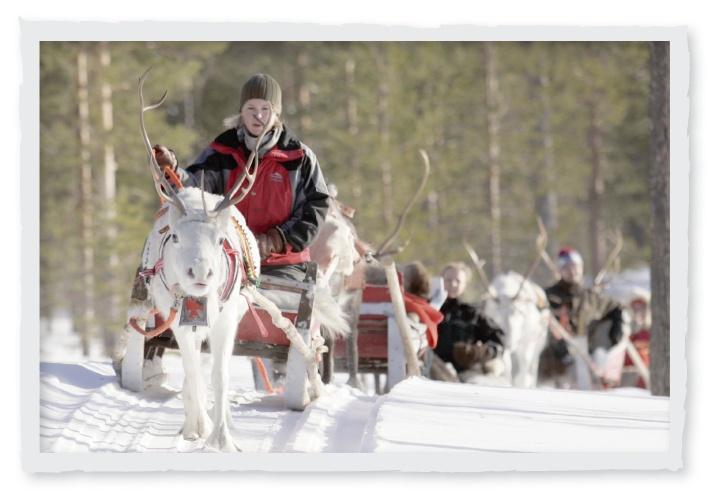 Reindeer safari, Rovaniemi, Lapland, Finland.   Activities in Saariselkä http://www.saariselka.com/individual/activities/