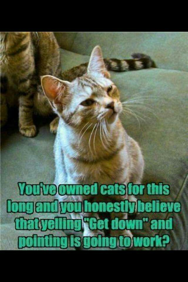 2405d16f600d235f07f38d9055bc1f7c cat shaming dog cat 814 best silly kitty images on pinterest funny animals,Get Down Cat Meme