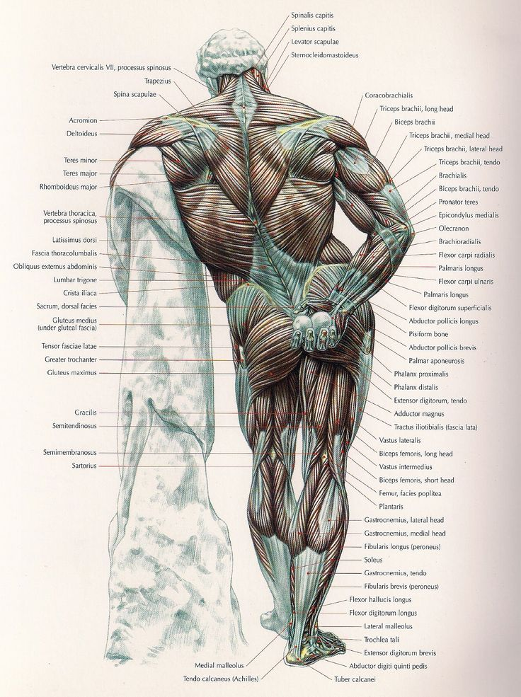 10 best anatomy images on Pinterest | Human anatomy, Anatomy and ...