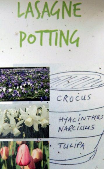Jetzt ist Zeit, Blumenzwiebeln zu pflanzen. Ich freue mich jetzt schon, wenn nach dem Winter die ersten Krokusse blühen, dann die Narzissen und schließlich die Tulpen...