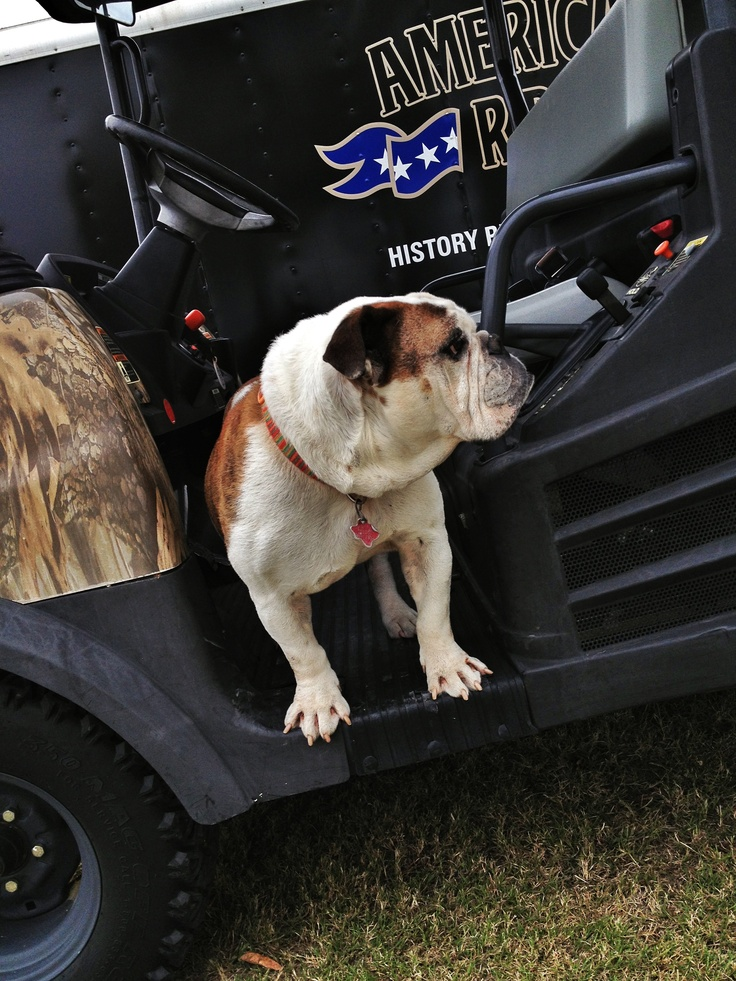 "New ""American Ride"" Mascot / Bob The English Bulldog"