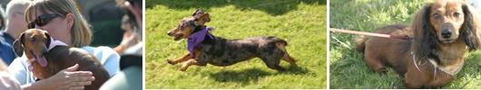 The Savannah Wiener Dog Races will be held Saturday, October 6!