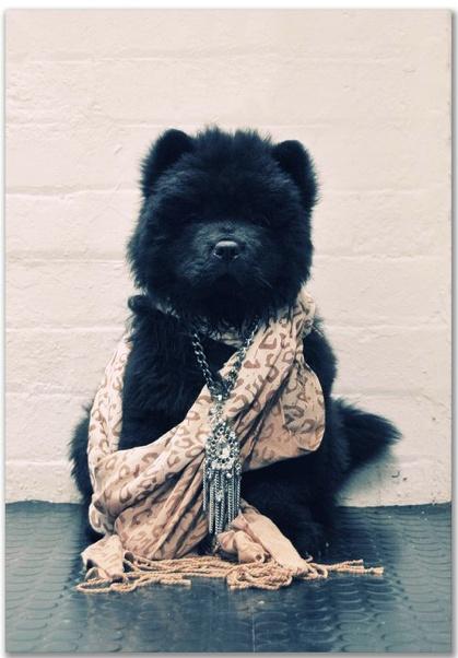 Mimco + Puppy= <3 #australianfashion