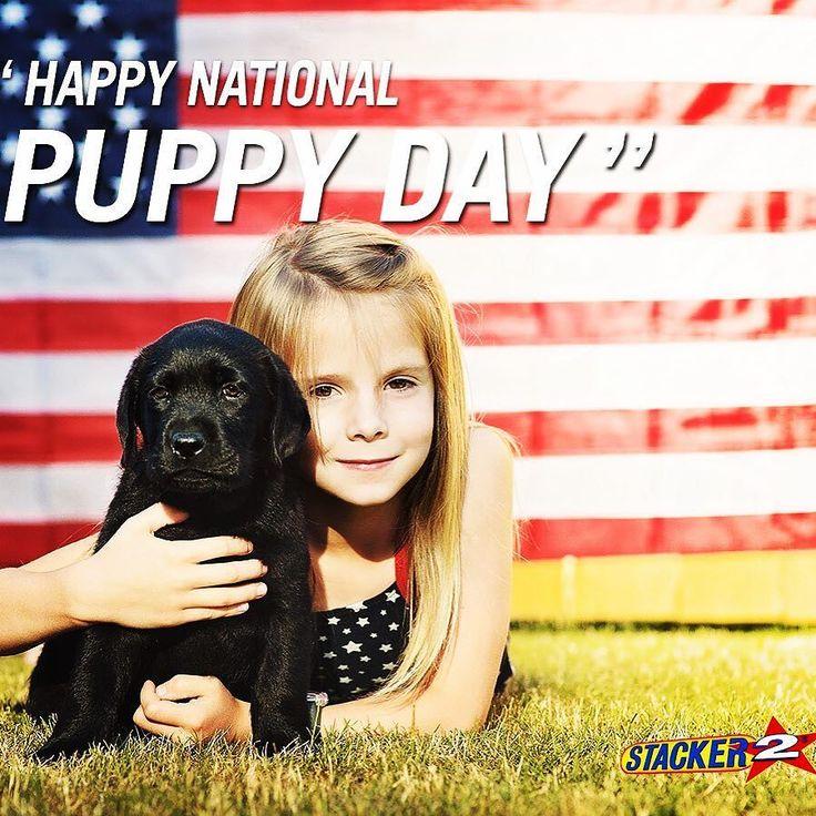 Happy national puppy day ! #stacker2energy #stacker2 #lovedogs  #nationalpuppyday #nationalbestfriendday #nationaldogday #lifeisbeautiful #pup #puppies #shessocute #and #heissocute #pug #pugcostume  #nationalmuttday  #modeldog #modelpup #doggie #doggylove #puppy #doggiestoller #bestdogs #cute #love #chiweipug #heart #paws