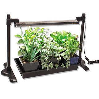 A universal light stand for starting seeds indoors and keeping tropical and tender houseplants well lighted during winter. Adjustable and easy to assemble, it includes everything but light bulbs!