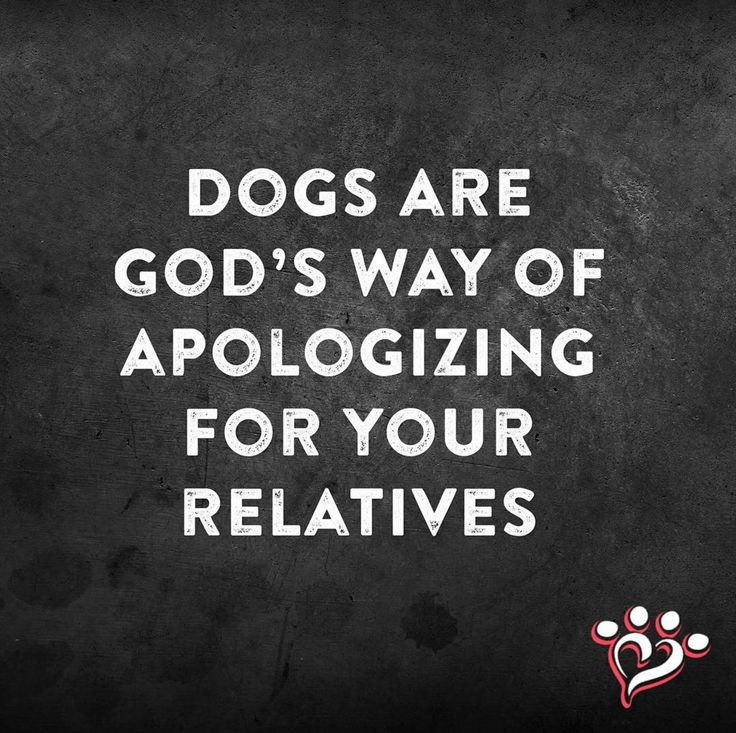 Dogs are God's ways of apologizing for your relatives