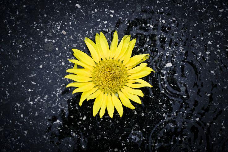 Días de lluvia, recordando… no llueve Maná del cielo… y en el corazón no ha parado de llover…..
