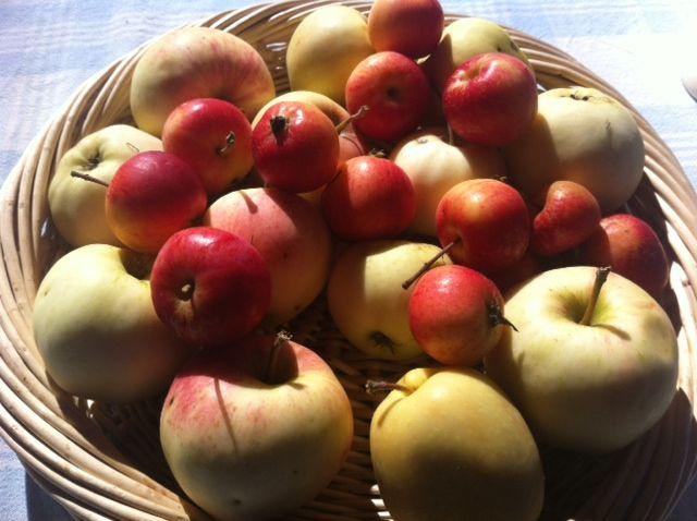 Sesonkiruokaa: herkullinen omenapiirakka www.ruokamenot.fi #ruoka #resepti #kotiruoka #finnishcuisine