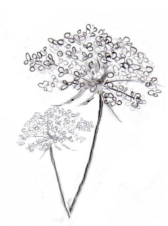 reserved listing for denslionea of Queen Anne's Lace tattoo design. $5.00, via Etsy.