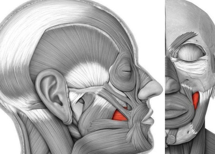 Из-за ослабевания щечной мышцы и частичного перемещения жира вниз, щеки обвисают и образуются брыли. Именно такие изменения являются одним из наиболее выраженных признаков старения. Чтобы избежать подобных метаморфоз следует выполнять специальные упражнения для щек – это поможет не допустить ослабевания щечной мышцы, благодаря чему лицо сохранит молодость. Представляем Вашему вниманию комплекс упражнений, который поможет предотвратить появление возвратных изменений и уменьшить их…