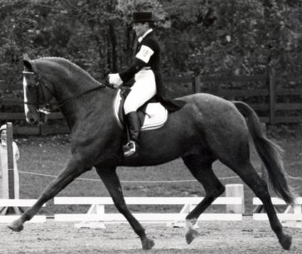 Keen (Willoughby) 1966 chestnut gelding; Bred on a racehorse farm in Riverside, California, Keen was repurposed as a dressage horse after proving too tall, at 17.2 hh, for a successful career on the racetrack. Named USDF Horse of the Year an incredible 5 times, Keen won Gold and Silver medals at 2 Pan Am Games, helped lead the U.S. to a bronze medal at the 1976 Summer Olympics and competed again in the 1984 Summer Olympics at the age of 18.Keen (Willoughby)