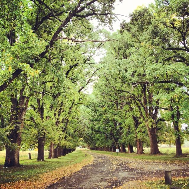 Trees of uralla