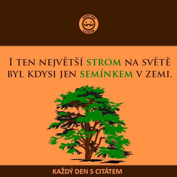 citaty-i-ten-nejvetsi-strom-na-svete