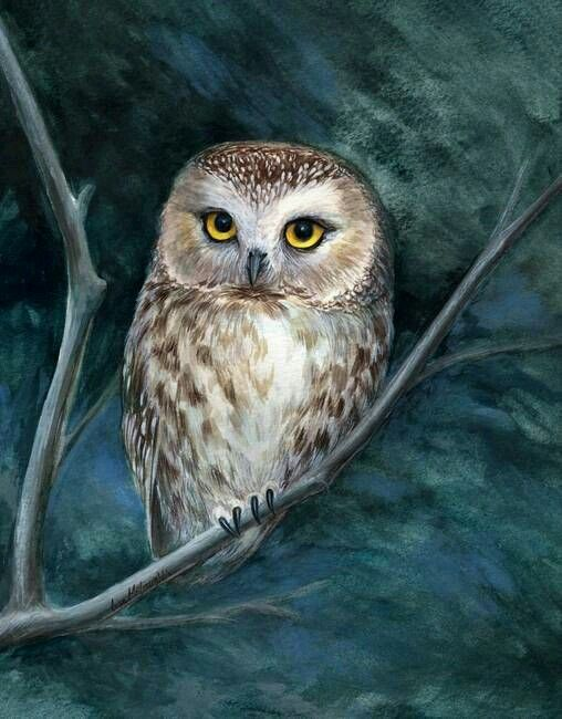 Great Horned Owl Black And Grey Tattoo 1962 best BUHOS o LECH...