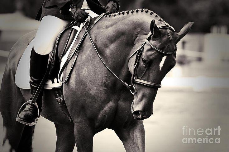 Elegance - Dressage Horse Photograph  - Elegance - Dressage Horse Fine Art Print
