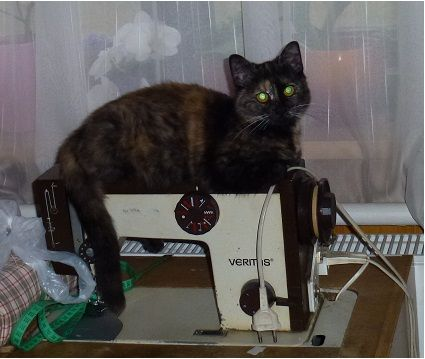 Naše kočička Švadlenka