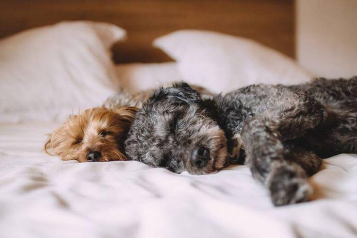 Θα έχετε καλύτερο ύπνο, αν τα κατοικίδια κοιμούνται μαζί σας