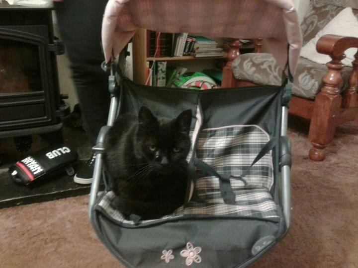 Cat in pram